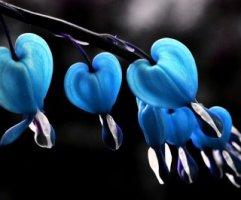 [예쁜꽃이미지]예쁜꽃사진/꽃배경화면
