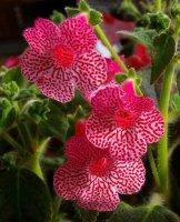 세상에 이런 멋진 꽃도 있네요