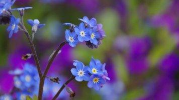 고화질 예쁜 꽃 배경화면 이미지 모음