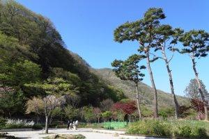 봄빛이 가득한 대아수목원
