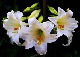 세상에서 가장 아름다운 꽃 사진 모음