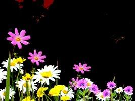 아름다운꽃 일러스트 이미지