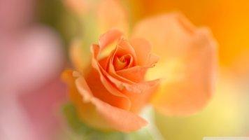 [컴퓨터 바탕화면 배경화면]아름다운꽃 고화질사진(노트북,빈티지,심플,손가락,러블리 이미지)1920 1080