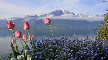 꽃이 있는 아름다운 풍경
