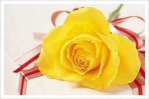 예쁘고 멋진 꽃