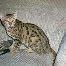 고양이와 가장 비슷한 느낌의 동물인 살쾡이의 관해 알아볼게요.