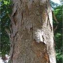 느티나무와 회화나무