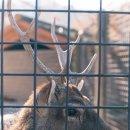 서울대공원 동물원에서 찍은 사진들