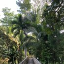 오랑우탄 보러 말레이시아 세필록에 다녀온 썰 (6) 산다칸에서 세필록의 숙소까지