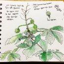 #09 칠엽수, 꽃사과, 서양측백나무, 산수유
