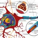 인공신경망의 개념 및 용어