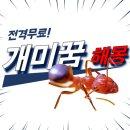 개미 꿈해몽, 철학관에 직접 물어봤어요^^