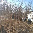 왕보리수와 이팝나무