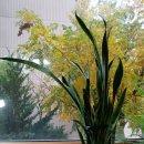 공기정화식물 ♧ 산세베리아 키우기/잎꽂이로 번식시키기