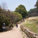 [광양] 옥룡사지 동백나무숲