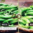 수미네 반찬 여리고추멸치볶음 육전 배추전 육전소스 겨자초간장 김수미 레시피 11회