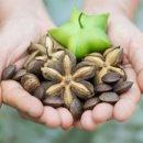 사차인치 효능 9가지 소개 - 심장질환, 면역력, 다이어트 등