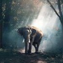 코끼리 꿈해몽. 아기코끼리꿈. 흰코끼리꿈해몽등을 알아봤어요 :)