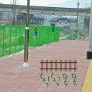 동화 속 소나무 - 중앙선 동화역 (2018. 1. 15)