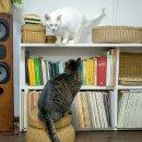우리 고양이들, 사람 말 가르쳐야겠어요