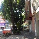 남미여행[페루/볼리비아/멕시코 여행] - 12 멕시코시티 지진 소동 完