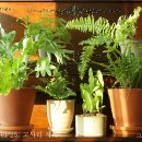 식물일기 EP25: 고사리 가족.