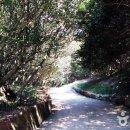 전남 광양 옥룡사 동백나무 숲 에는 뭐가 있을까?!