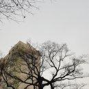 과천시 중앙동 560년된 보호수 회화나무을 우연히 발견하다..