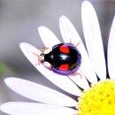 걍 무당벌레의 다양한 색깔과 무늬