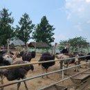 <b>파주</b> 아기랑 갈만한 곳, 우농타조농장 즐거운 동물체험이동