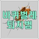 바퀴벌레 퇴치법 알아보기
