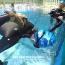 BEFREE 대전프리다이빙 SSI LV1 이재영님 IN 대전/용운국제수영장