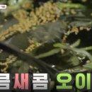 청담동 밥블레스유 불맛 쭈꾸미 김숙 선학주꾸미 11회
