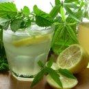 레몬밤 효능 다이어트 하루 섭취량