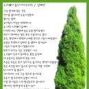 노르웨이숲의 사이프러스 / 김혜영
