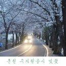춘천 벚꽃 명소 수자원공사 벚꽃길